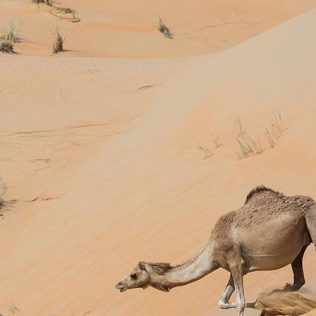 FROM DUBAI TO LIWA – A REWARDING ROAD TRIP